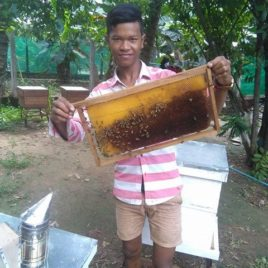 Beekeeping Cambodia Hive Management